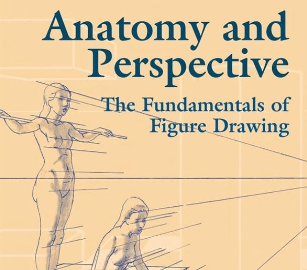 Anatomy and Perspective